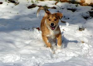 cane che corre con il freddo